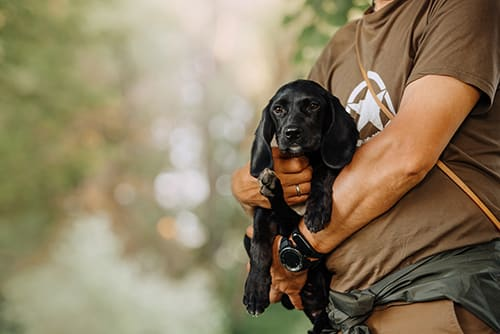 Vaccination Schedule for Dogs & Puppies | Greensboro Vet