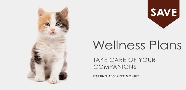 Pet Wellness Plans in Greensboro, NC