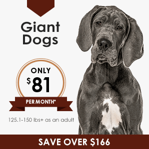 Giant Dog Wellness Plan | Greensboro Veterinarian | Friendly Animal Clinic