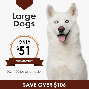 Large Dog Wellness Plan | Greensboro Veterinarian | Friendly Animal Clinic