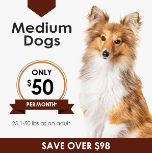 Medium Dog Wellness Plan | Greensboro Veterinarian | Friendly Animal Clinic
