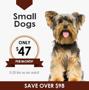 Small Dog Wellness Plan | Greensboro Veterinarian | Friendly Animal Clinic